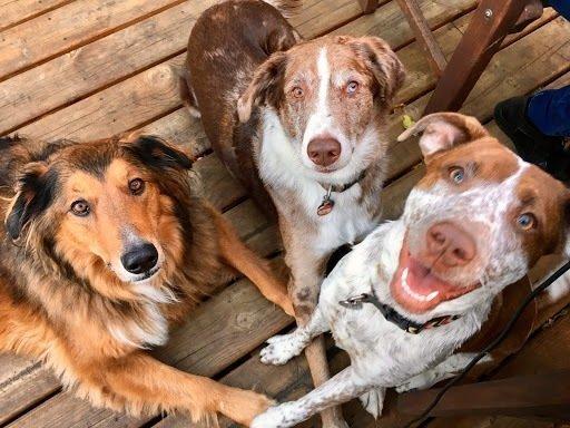 HAR dogs